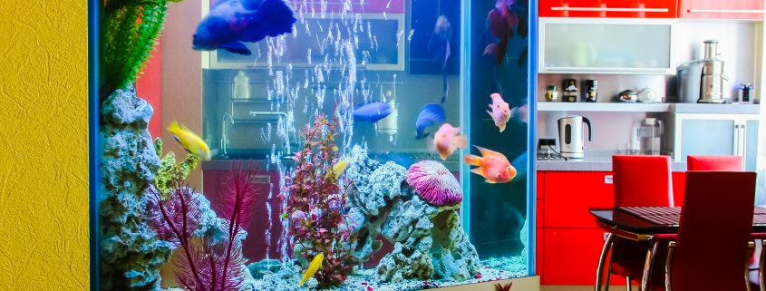 Aquarium of Fish to Move? No Problem