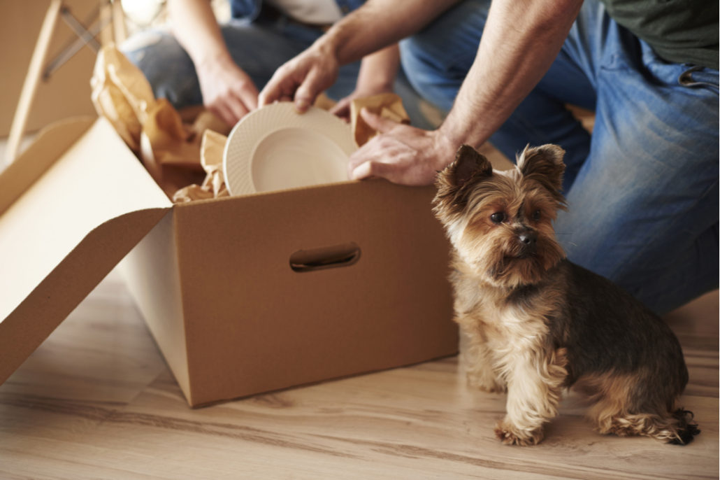 9 Moving and Packing Tips to Make Your Move Simple - Ayer Moving & Storage,  Ayer MA