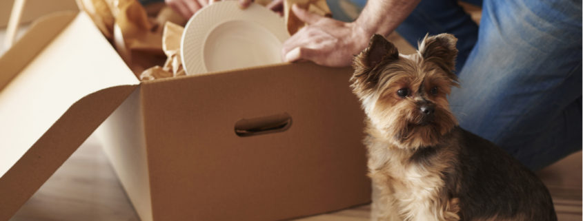9 Moving and Packing Tips to Make Your Move Simple